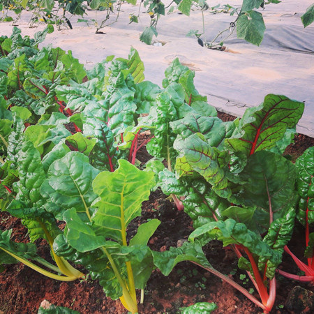 organic farming Vietnam